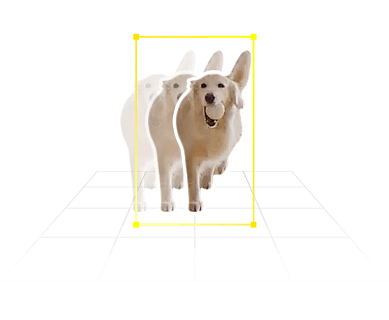 Motion-tracking on a pet dog