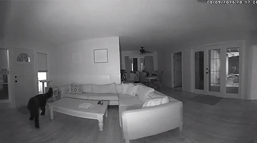 Night vision snapshot of a room with pet